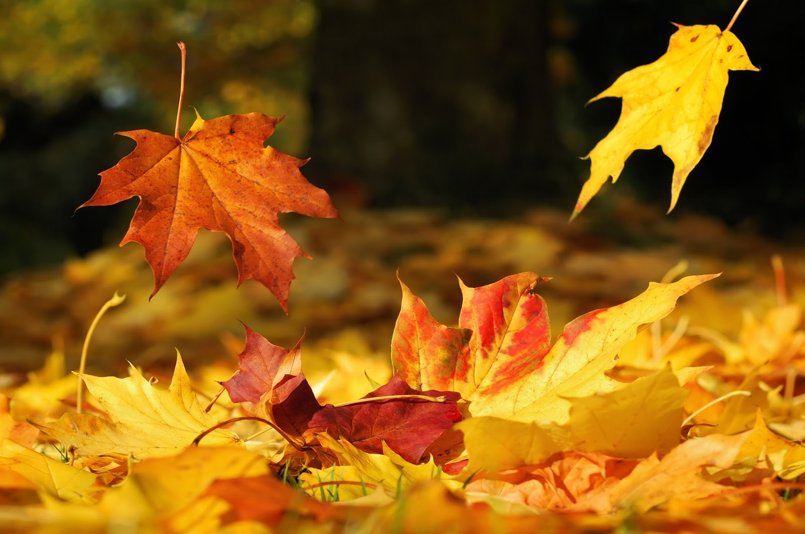 Autumn leaves set to fall!